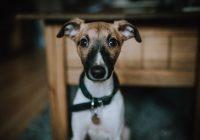 Gør din hund lovlig med hundetegn